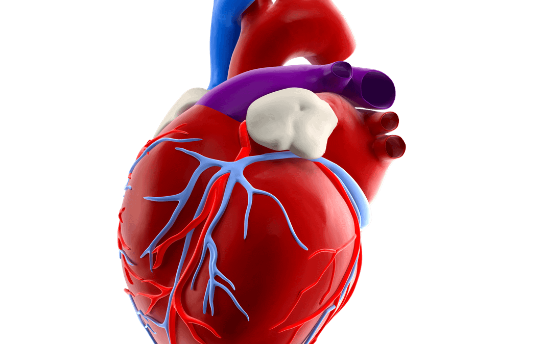 Topic 1: The Cardiovascular Genes