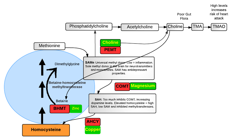 What is the PEMT gene?