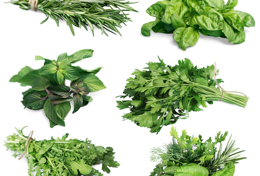 A recommended nutrigenomic diet of basil, parsley, arugula, and mint for colon health