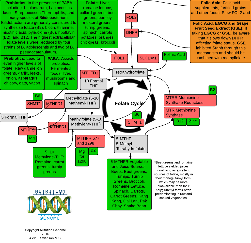 What is MTHFR C677T?